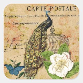 Sticker Carré paon botanique français de cru de cage à oiseaux