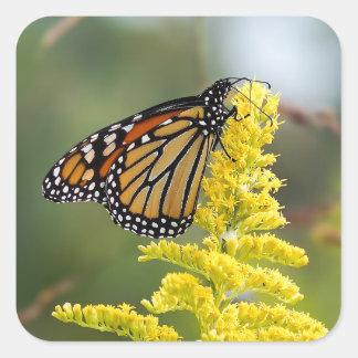 Sticker Carré Papillon de monarque sur l'autocollant de carré