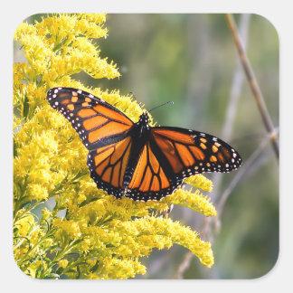 Sticker Carré Papillon de monarque sur l'autocollant doré