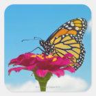 Sticker Carré Papillon de monarque sur une fleur