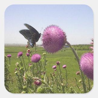 Sticker Carré Papillon grand de prairie d'herbe sur le chardon