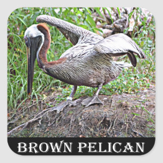 Sticker Carré Pélican de la Louisiane Brown