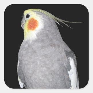 Sticker Carré Photo de Cockatiel d'oiseau d'animal familier