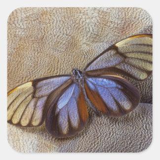 Sticker Carré plume égyptienne d'oie de papillon de Verre-aile