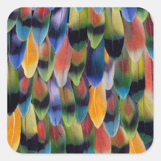 Sticker Carré Plumes colorées de perroquet de perruche