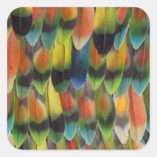 Sticker Carré Plumes de queue colorées de perruche