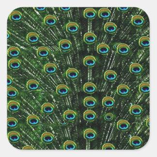 Sticker Carré Plumes magnifiques de paon