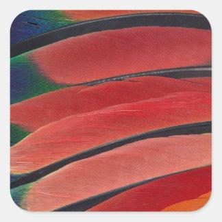 Sticker Carré Plumes rouges de perroquet d'Amazone