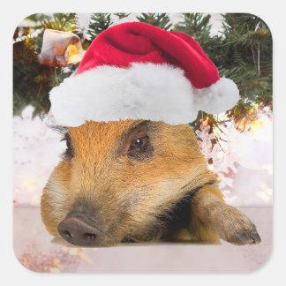 Sticker Carré Porc doux dans l'arbre de Noël de casquette de