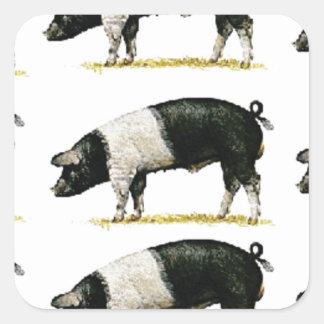 Sticker Carré porcs dans une rangée