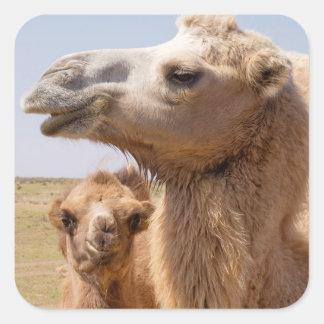 Sticker Carré Portrait de chameau Bactrian