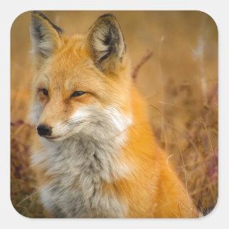 Sticker Carré renard