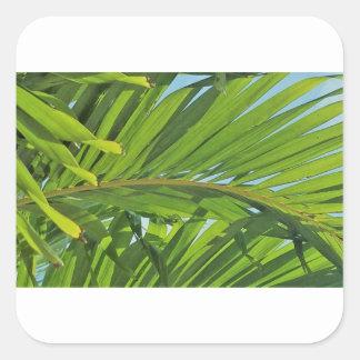 Sticker Carré Rêves de palmier