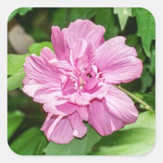 Sticker Carré Rose d'autocollant de fleur de Sharon