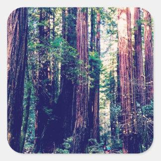 Sticker Carré Séquoias de Californie