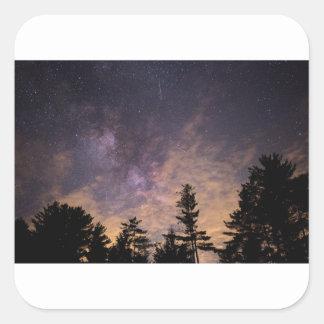 Sticker Carré Silhouette des arbres la nuit