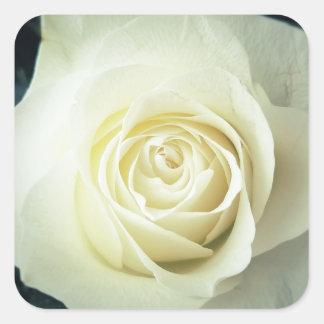 Sticker Carré Tasse de rose blanc
