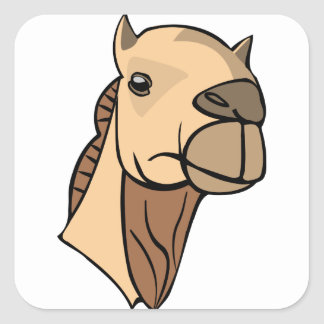 Sticker Carré Tête de chameau