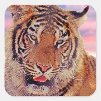 Sticker Carré Tigre somnolent -