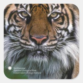 Sticker Carré Tigre Soyono de Smithsonien | Sumatran