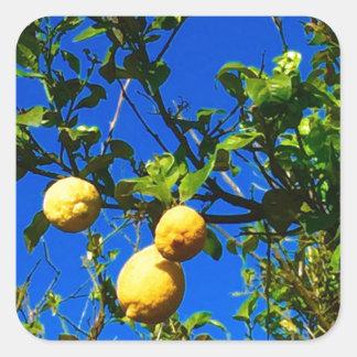 Sticker Carré Trois citrons siciliens
