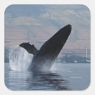 Sticker Carré violation de baleine de humback