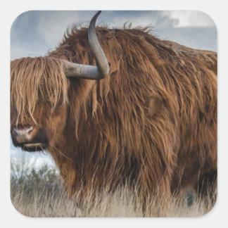 Sticker Carré Yaks de Brown sur le vert et le champ d'herbe de