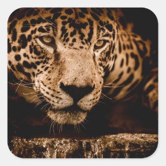 Sticker Carré yeux de égrappage de l'eau de jaguar