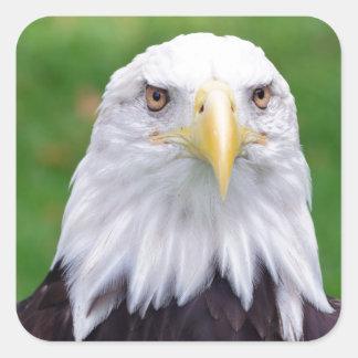 Sticker Carré Yeux d'Eagle chauve