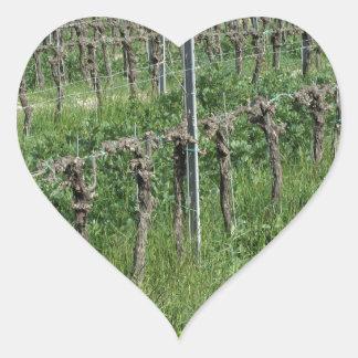 Sticker Cœur Champ nu de vignoble en hiver. La Toscane, Italie