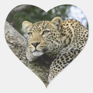 Sticker Cœur Chat sauvage animal de safari de l'Afrique d'arbre