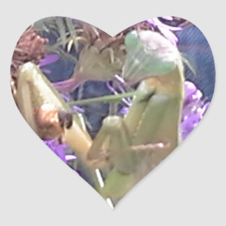 Sticker Cœur Exploration de scarabées de Milkweed en masse