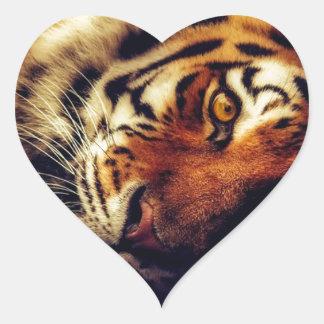 Sticker Cœur Faune animale de tigre reposant le macro plan