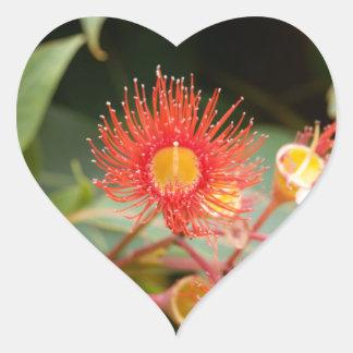 Sticker Cœur Gomme fleurissante rouge (ficifolia de Corymbia)