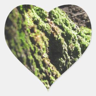 Sticker Cœur La mousse verte dans le détail de nature de la