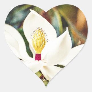 Sticker Cœur Magnolia magnifique du Mississippi