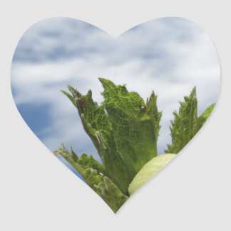 Sticker Cœur Noisette verte fraîche simple contre le ciel bleu