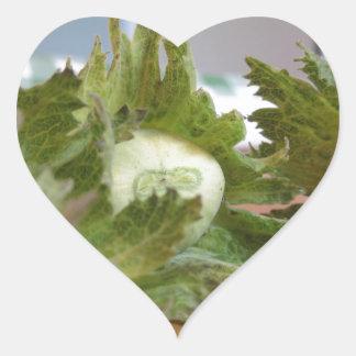 Sticker Cœur Noisettes vertes fraîches sur une table en bois