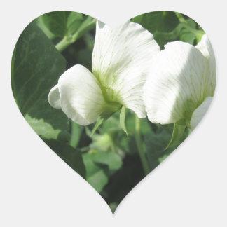Sticker Cœur Plante de pois fleurissant dans un domaine. La