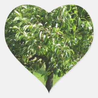 Sticker Cœur Poirier avec le feuille vert et les fruits rouges
