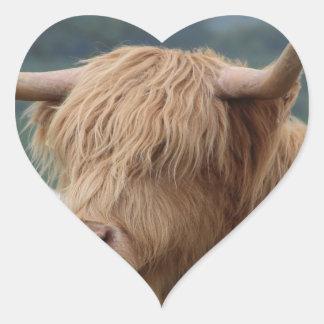 Sticker Cœur portrait des bétail des montagnes