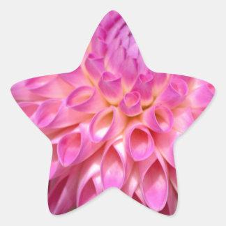 Sticker Étoile Affiche rose abondante de dahlia et de bourgeon