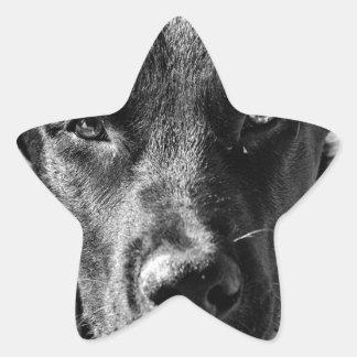 Sticker Étoile Animal familier canin de chien