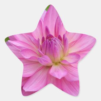 Sticker Étoile Beauté rose de dahlia