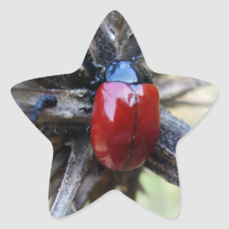 Sticker Étoile beetle