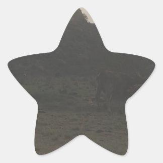 Sticker Étoile Bétail de coucher du soleil
