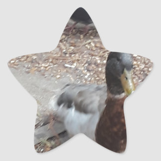 Sticker Étoile Canard de Mallard