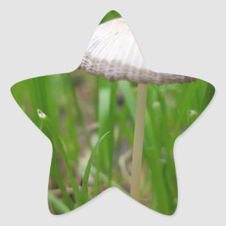 Sticker Étoile champignon de bébé