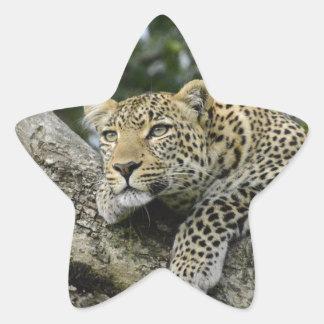 Sticker Étoile Chat sauvage animal de safari de l'Afrique d'arbre