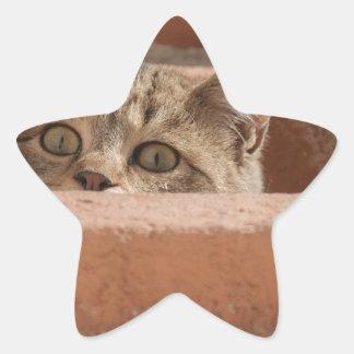 Sticker Étoile Chat sauvage curieux d'attention des plots